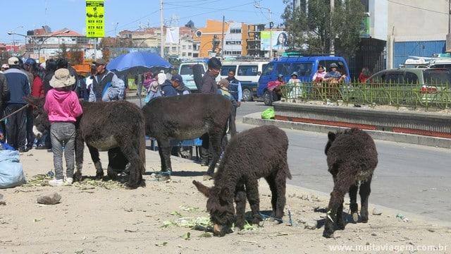Os burrinhos estavam em El Alto