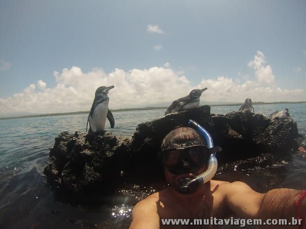 Uma selfie na água com um pinguim de Galápagos. Tem coisa que só a GoPro faz para você