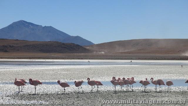 Há lagoas em que dá para chegar a menos de dois metros de flamingos