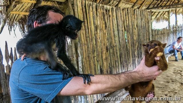 Macacos em uma aldeia em Puyo, na Amazônia equatoriana. O marronzinho é um mono noturno, o pretinho era chato para caramba