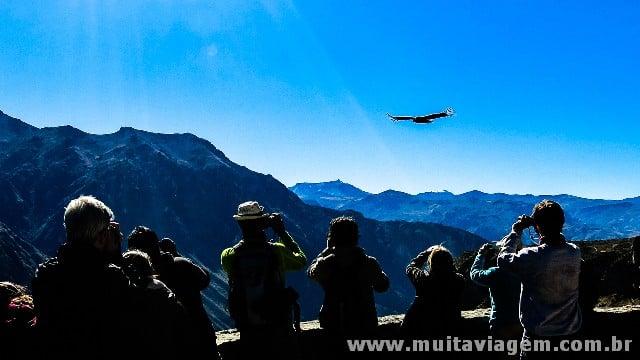 O majestoso condor andino voa sob o Cânion de Colca, o mais profundo do mundo, no Peru