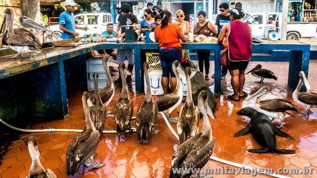Pássaros e lobo-marinho esperam a vez em peixaria em Galápagos