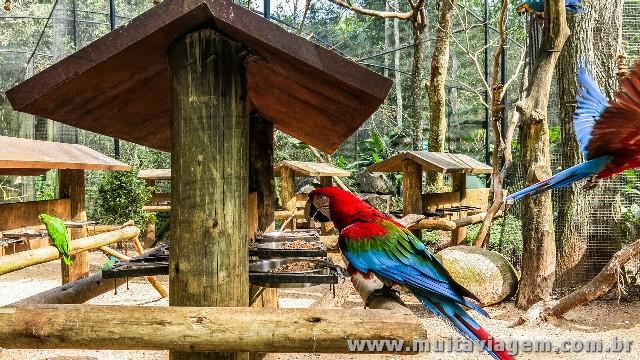 Arara no Parque das Aves, em Foz do Iguaçu, no Brasil