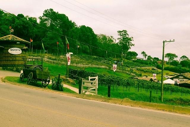 Estrada do vinho, em São Roque, é destaque no interior de SP.