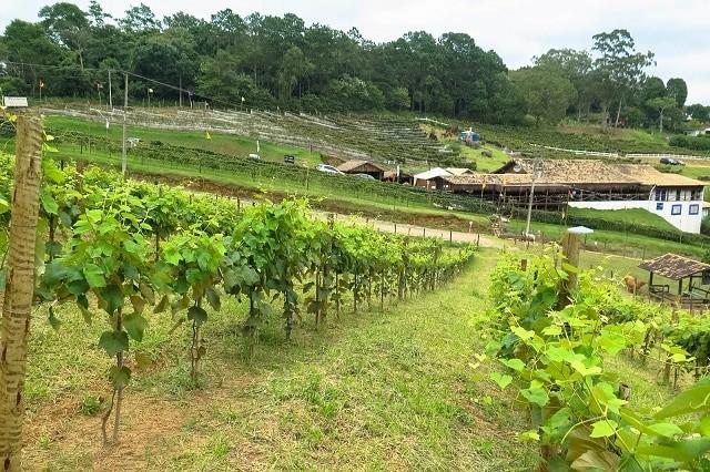 Entre os destinos para ir em novembro perto de SP, São Roque é um dos melhores e mais baratos
