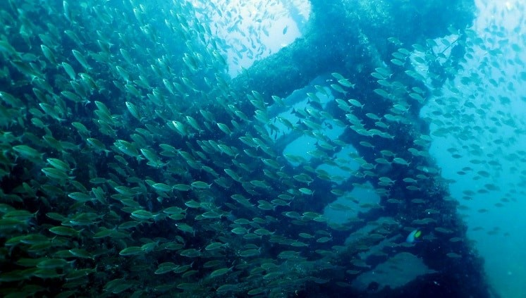 Os navios também guardam linda vida marinha para ver no mergulho - Atlantes Guarapari/ES