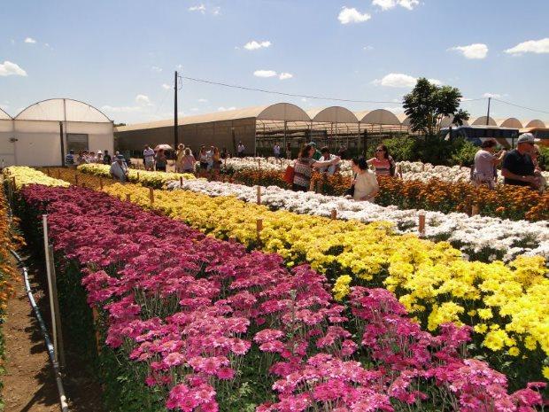 Comprar flores é em Holambra, um dos lugares mais românticos do Circuito das Águas