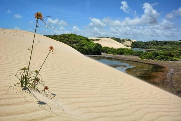 Dá para fazer passeios de bugue ou a pé nas dunas em Natal-RN