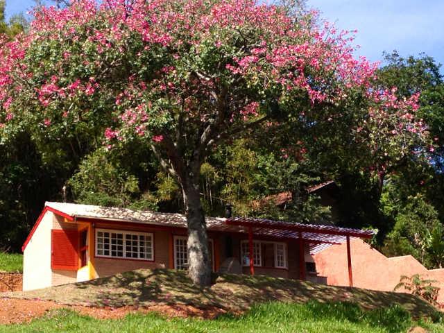 Santo Antônio do Pinhal tem muitas opções de chalés românticos para o inverno