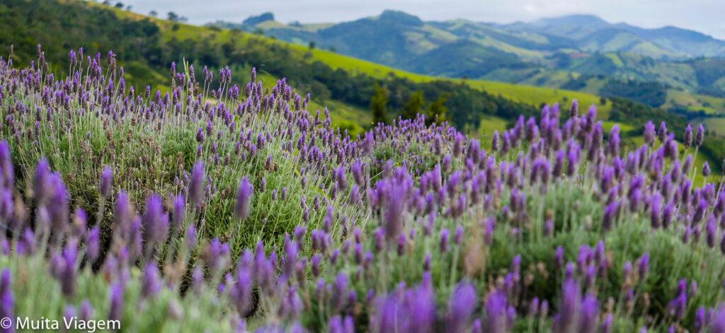 Os campos de flores de Cunha tecem o cenário romântico no destino para a viagem de casal barata no Brasil